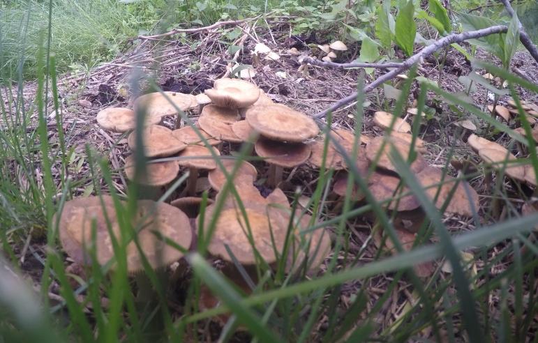Mushrooms along the Akron Rail Trail
