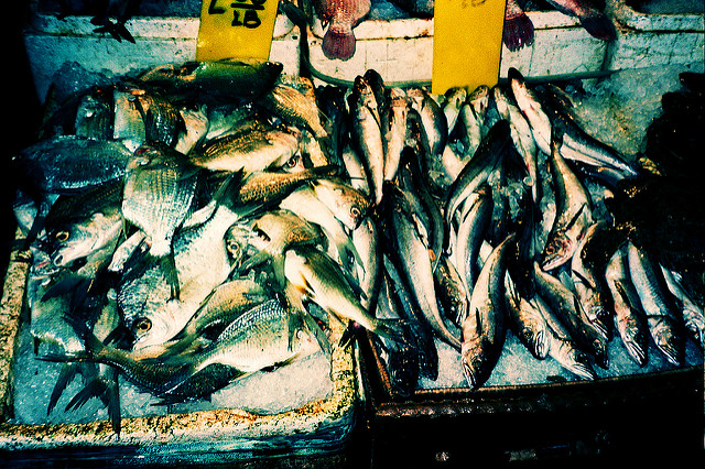 Fish in a market in Chinatown, NYC