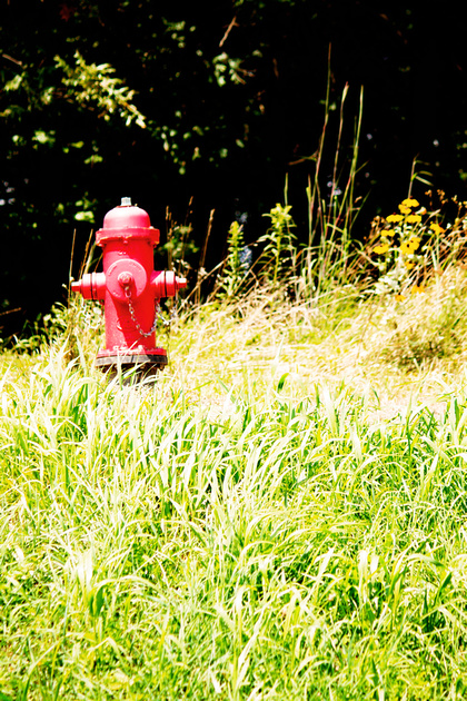 A fire hydrant at Bald Eagle State Park