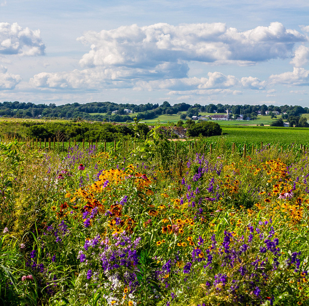 View of the Kissel Hill Flower Field