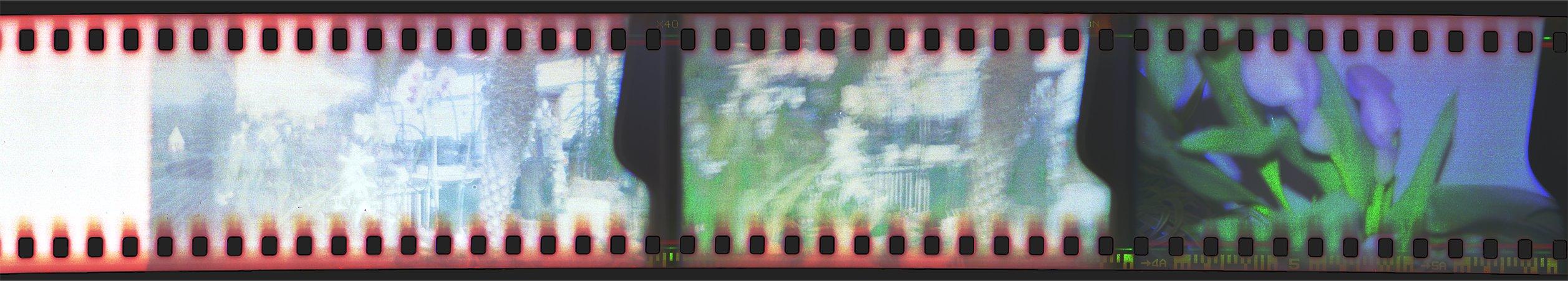 Gardens and Cala Lillies Holga 35mm Sprockets