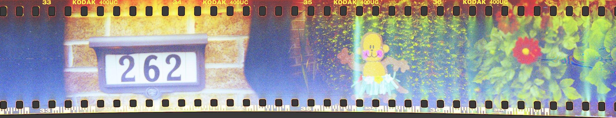 Sign Monkey Flower Holga 35mm Sprockets