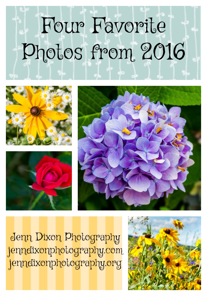 Four Favorite Flower Photos from 2016. Jenn Dixon Photography